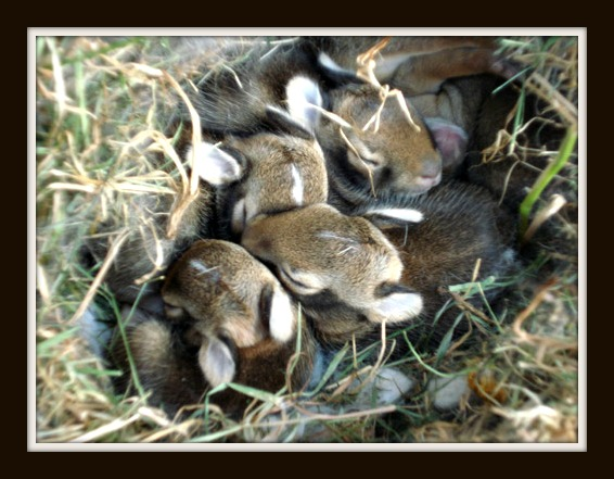 Wild Bunnies - Gainesville Rabbit Rescue